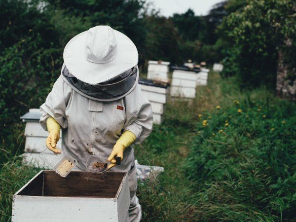 Urban Beekeeping & Honey Harvesting for Beginners