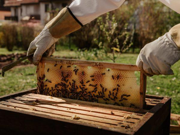 Bee Basics For Beginner Beekeepers